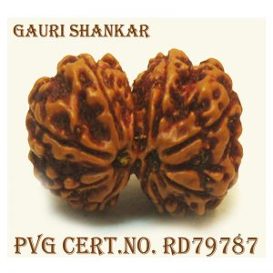 GAURI SHANKAR-4392-T998