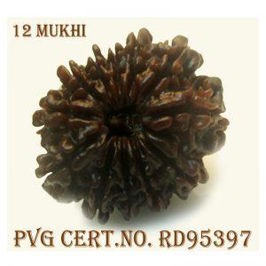 12mukhi-2790-H536