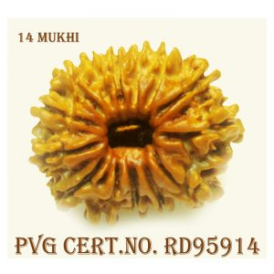14Mukhi-2804-T252