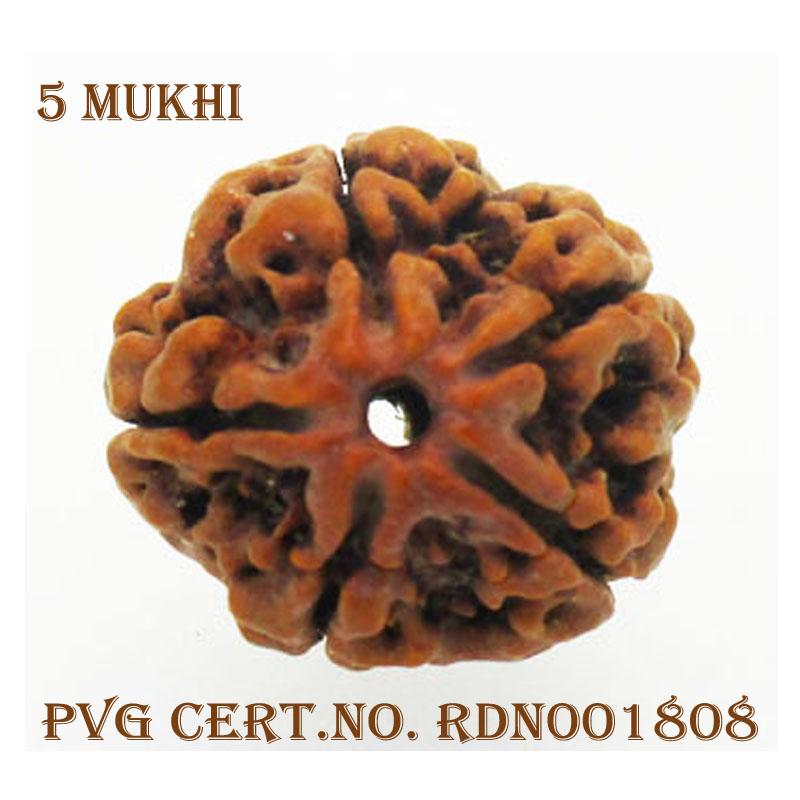 5Mukhi-3566-P682-1
