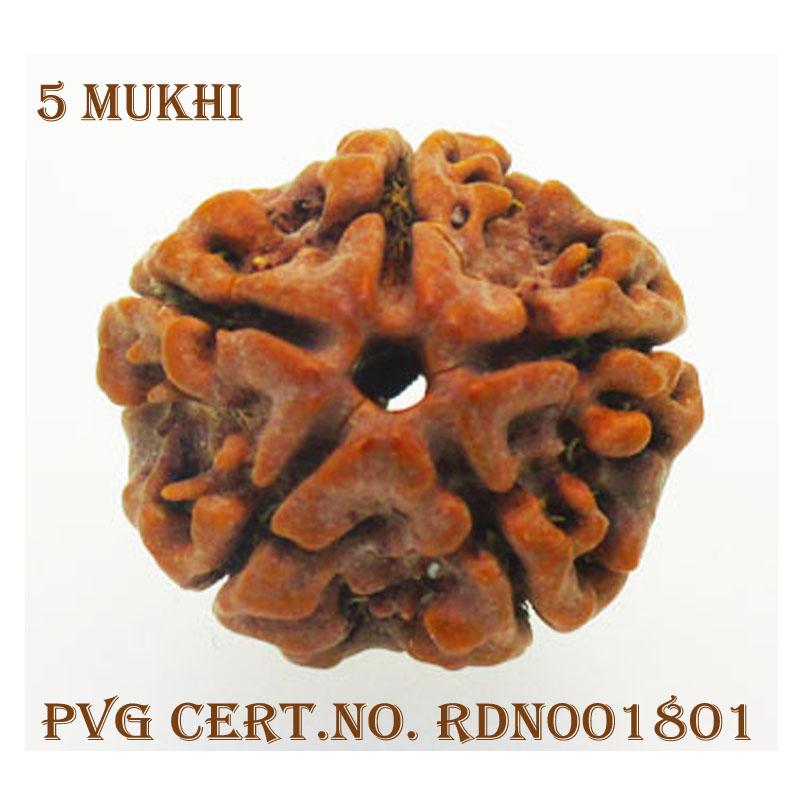 5Mukhi-3644-C710-1