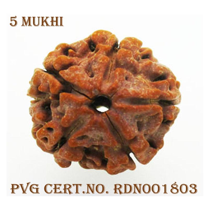 5Mukhi-3770-X817-1